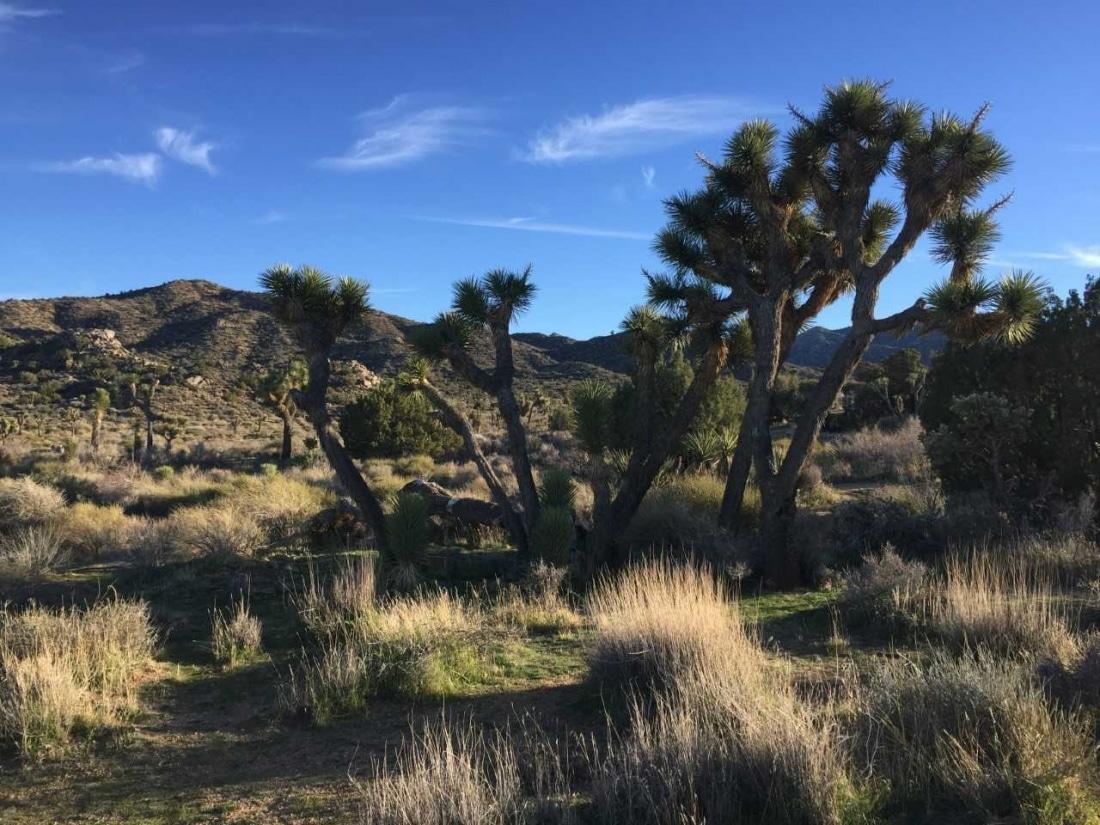 The landscape at Joshua Tree.