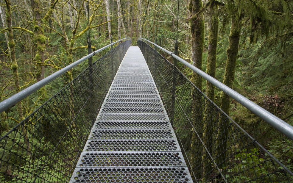 A view of the IslandWood Suspension Bridge.