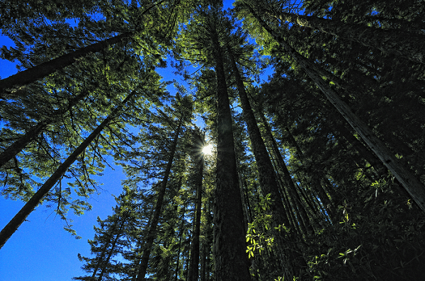 Trees against a bright blue sky.