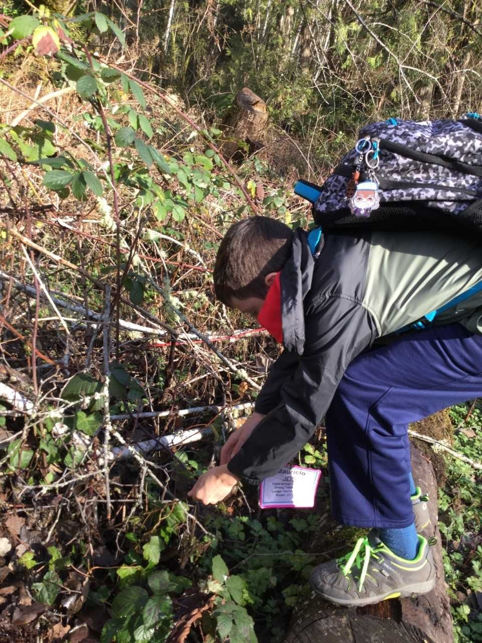 A student bends down to pull invasive ivy.
