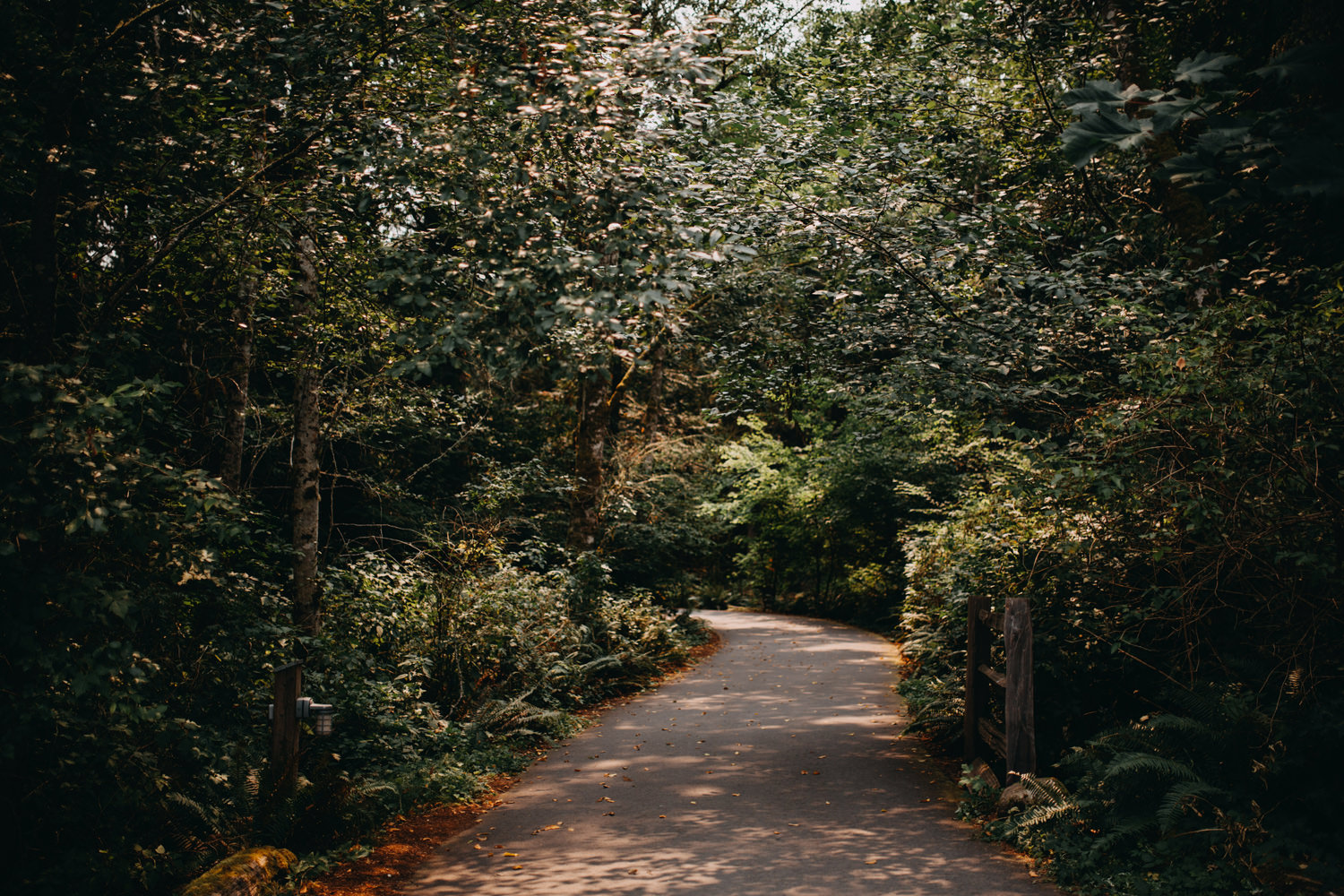 A paved path through the forest at IslandWood's Bainbridge Island campus.