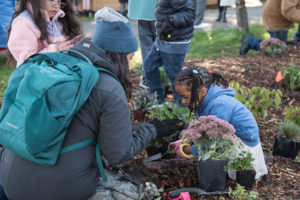 Celina Steiger works with students to plant the rain garden. Image courtesy of Seattle Public Utilities.