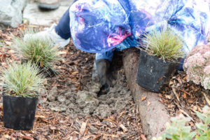 A student helps with the planting of the rain garden. Image courtesy of Seattle Public Utilities.