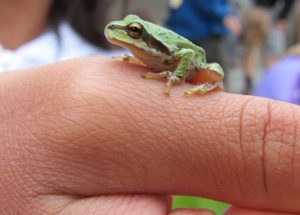 A closeup shot of a person's finger with a small frog sitting on it.