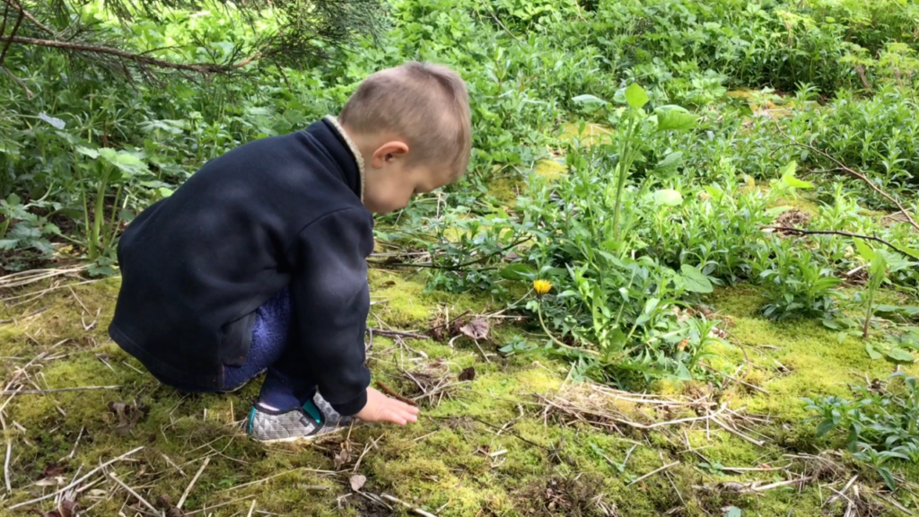 [Image description: a child kneels on the mossy ground to search for insects.]