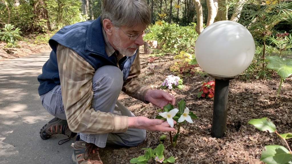 [Image description: John Haskin kneels next to a trillium plant.]