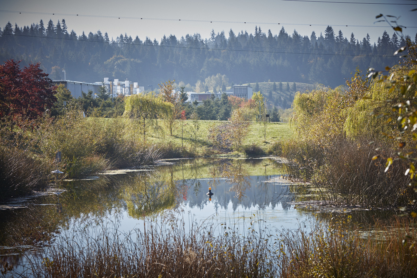 A photo of one of the ponds on the grounds at the Brightwater Treatment and Education Center.