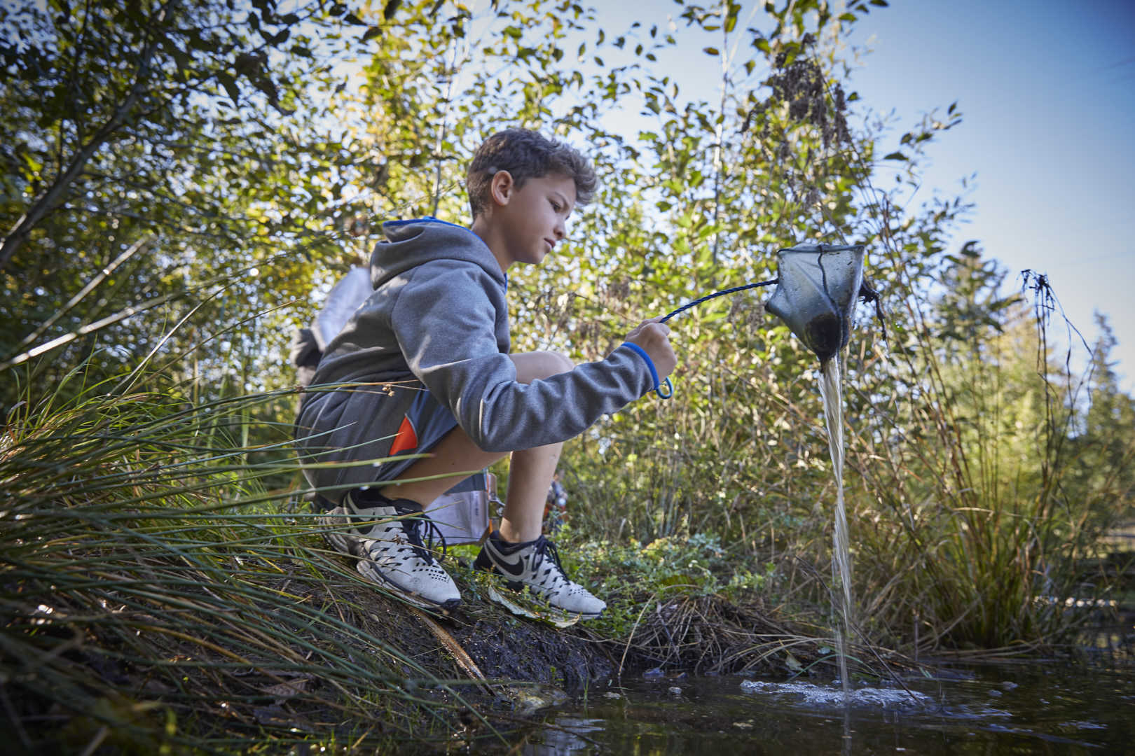 A child kneels beside a pond at Brightwater, and uses a net to get a sample of the plant life in the pond.