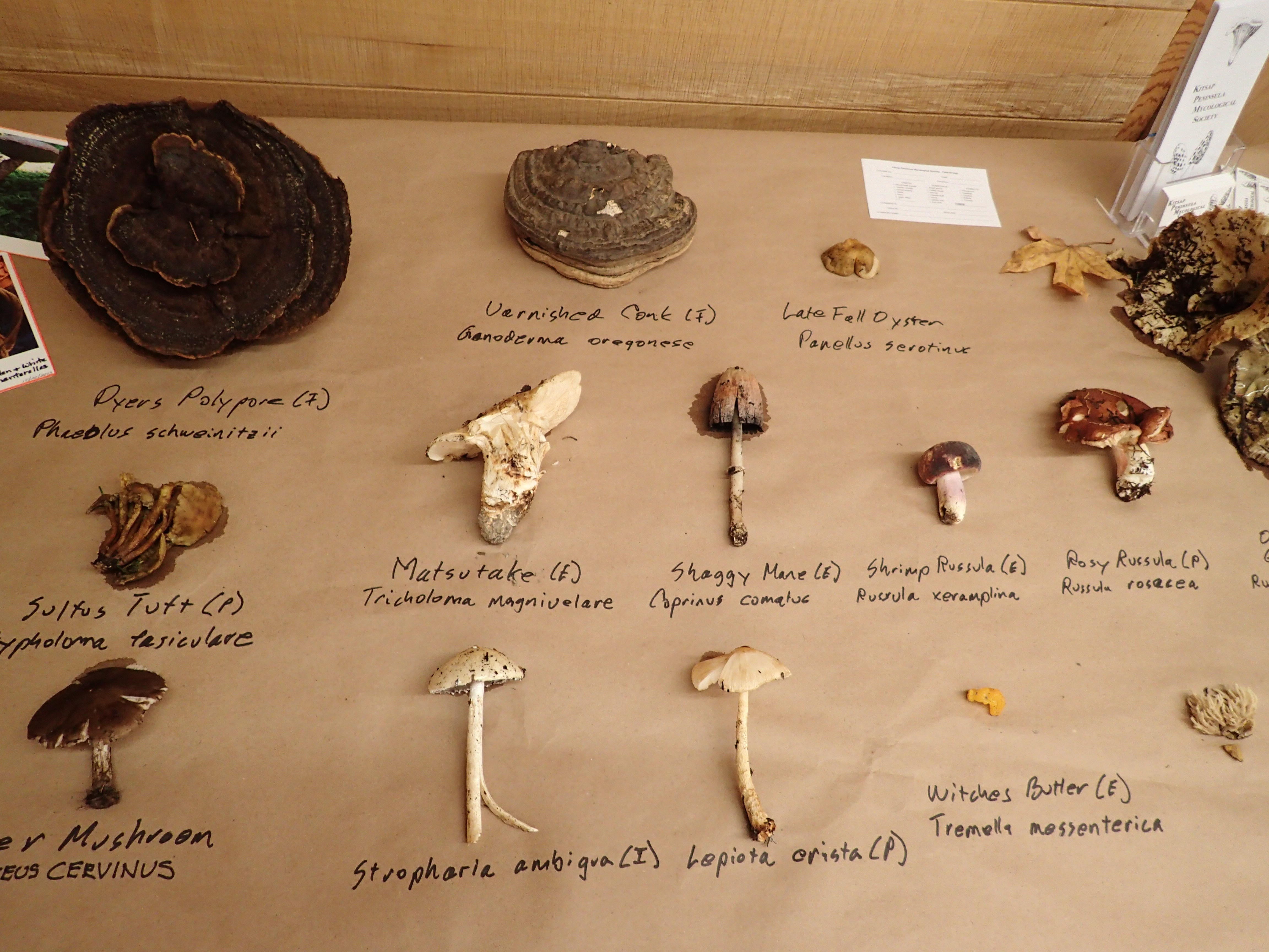 A selection of fungi discussed in last year's Mushroom Mania lecture.
